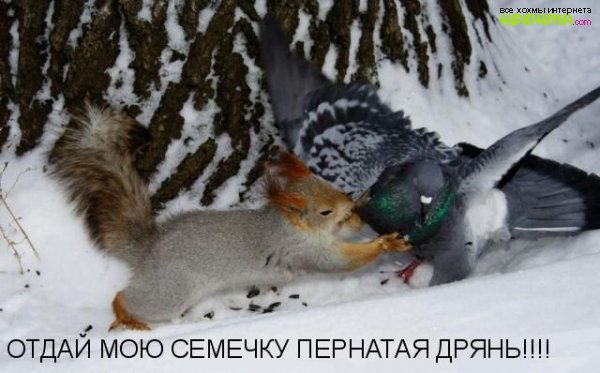 Картинки животных с надписями ...: hoohma.com/prikol/2565-kartinki-zhivotnyx-s-nadpisyami.html