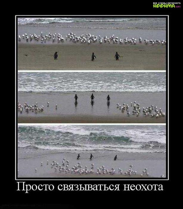 Силденафил цена украина