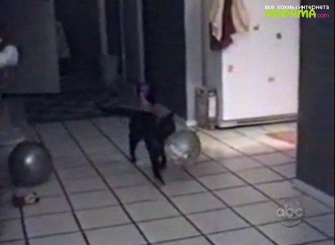 Видео подборка приколов про котов